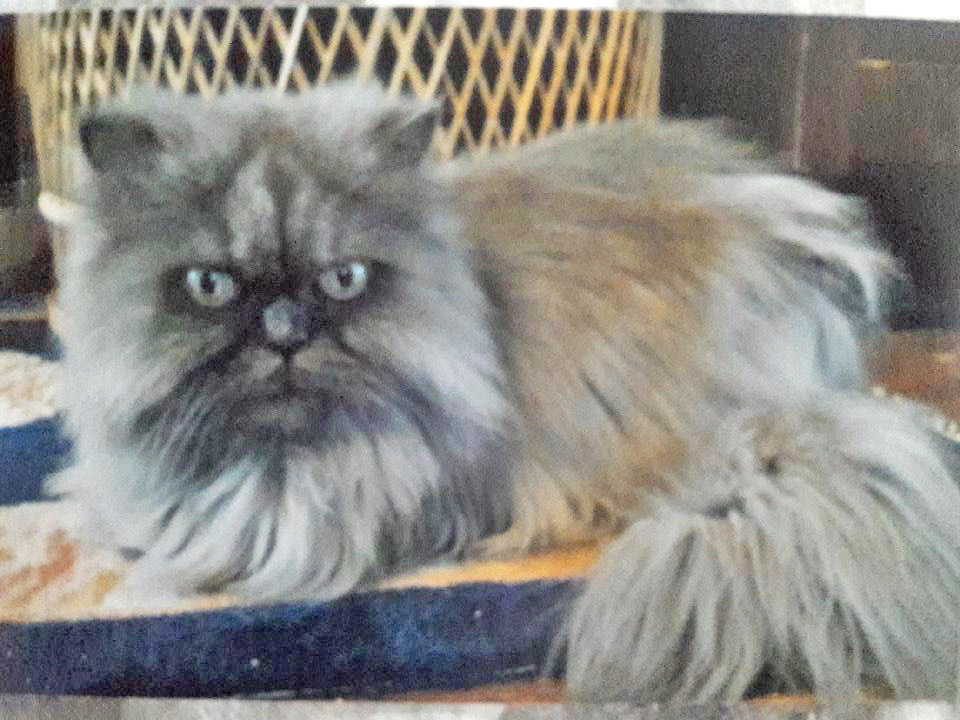 Humane Society's oldest resident passes away - The Catalina Inslader